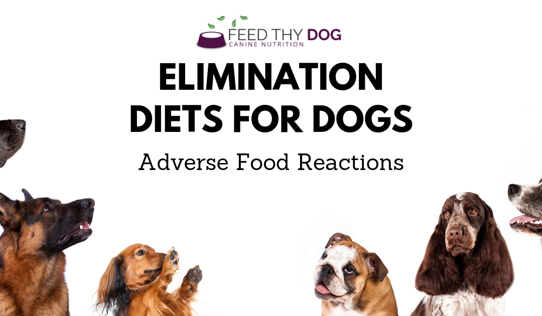 Elimination Diets for Dogs | Adverse Food Reactions